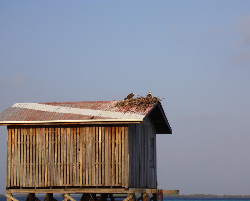 birds making a nest on top of a boat shed