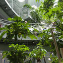 2868-Academy of sciences rainforest