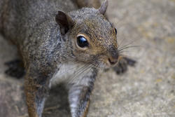 2882-Cute Squirrel