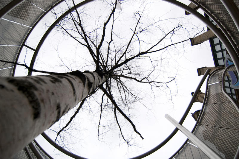an abstract image of a tree surrounded by a building