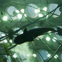 2884-Under the fish tank