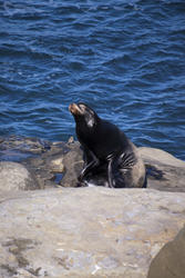 2646-black seal
