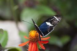 2885-butterfly feeding