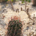 2744-cactus garden