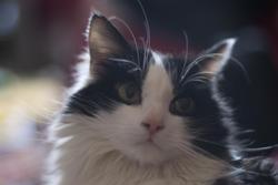 2851-domesticated cat