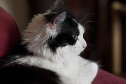 2852-cat_profile.jpg