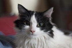 2853-cat look