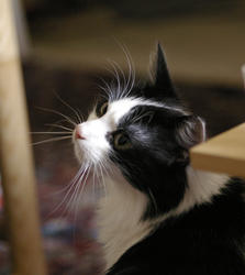 2855-cute cat wiskers
