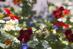 2841-country garden flowers