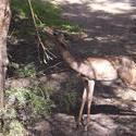2215-feeding deer