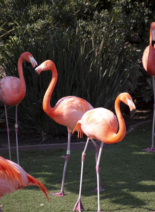 brightly coloured pink flamingos