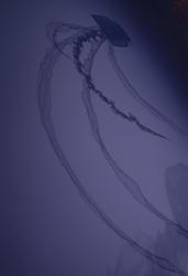 2184-jellyfish shape