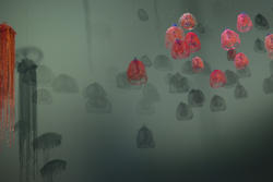 2185-a fluther of jellyfish