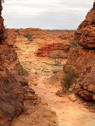 2912-kings canyon walking track