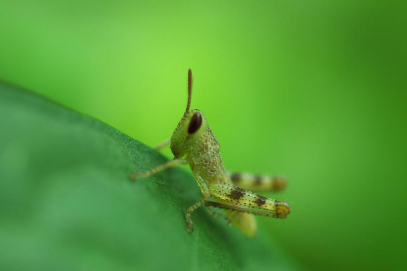 2241-locust macro