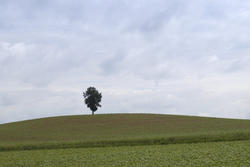 2800-one tree in a field