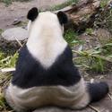 2254-panda back