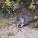 2259-squirrel