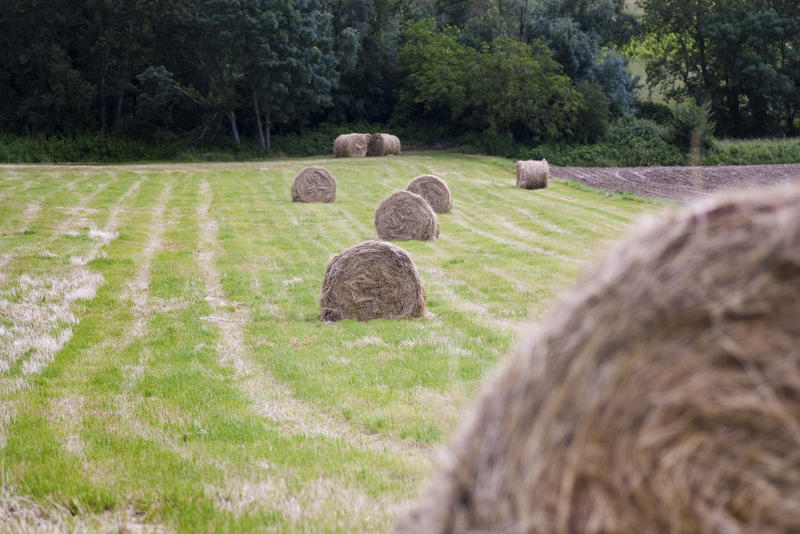 a field with several large bales of straw