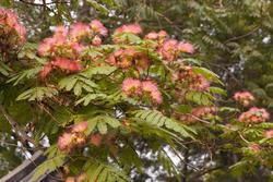 2848-tree blossom