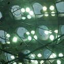 2869-Academy of Science Aquarium