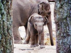 3717-Elephants.JPG
