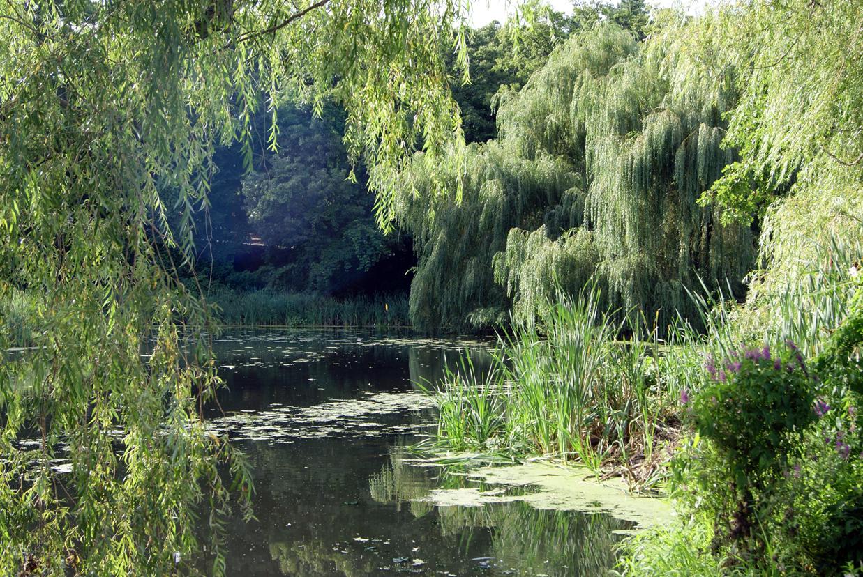 Swamp Freeimageslive