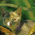 3751-Kitten In Tree II