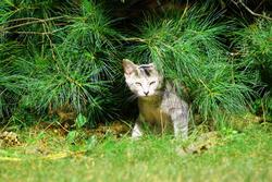 3750-Kitten Under Tree