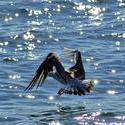3767-Seagull Landing