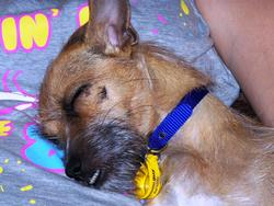 3715-Sleeping_Dog.JPG
