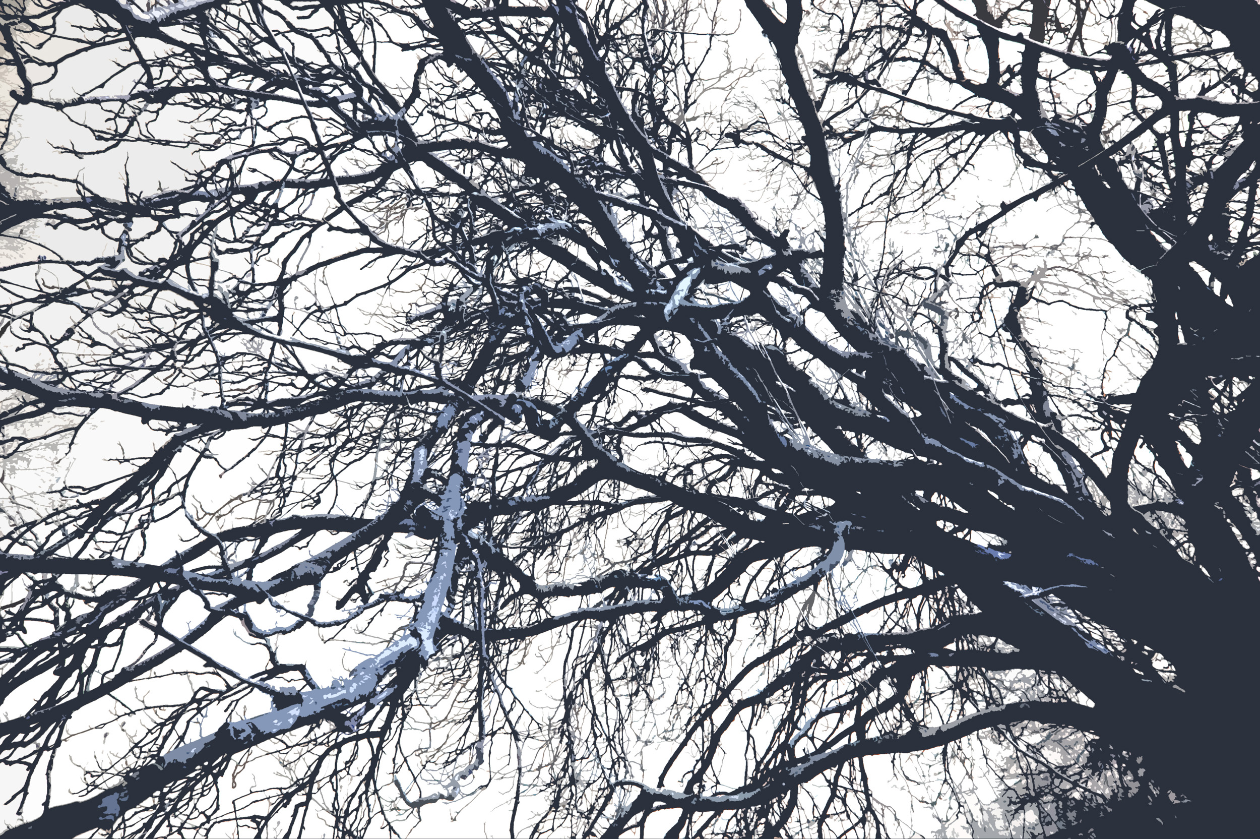 free stock photo 3000winter trees branches freeimageslive