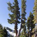 3018-Alpine spring