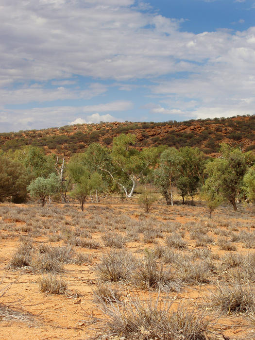 a dry river bed near alice springs, NT, australia