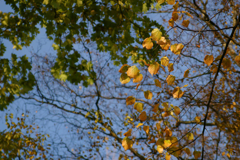 3247-yellow and green leaves