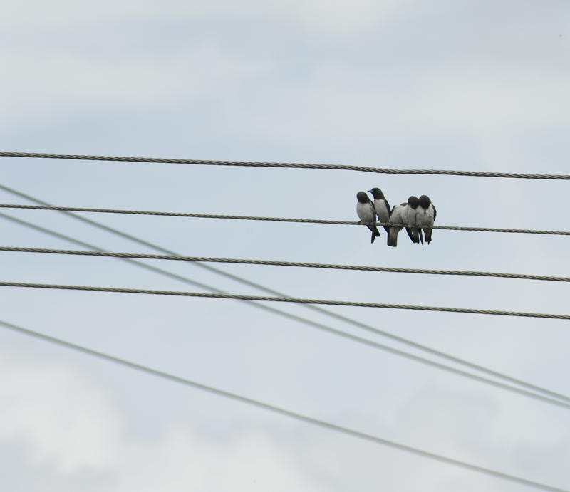 5 birds huddled toegeher on a power line