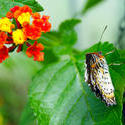 4287   Exotic Butterfly