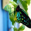 4291   butterfly 7