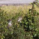 3133-chipmunks in the grass
