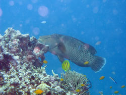 3342-coral fish