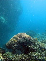 3344-coral reef