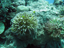 3345-corals