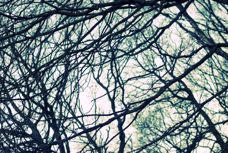 3002-cross processed woods