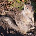 3222-squirrel