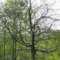 4122   dormant tree branches