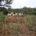 4091-feral donkeys