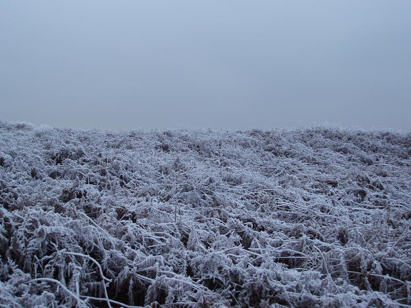 3430-frozen bracken