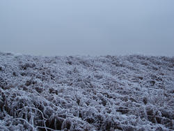 3430-frozen bracken