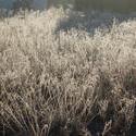 3468-frozen grasses