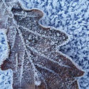 3473-frozen  leaf